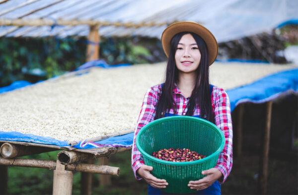 Kahve İşleme Yöntemleri