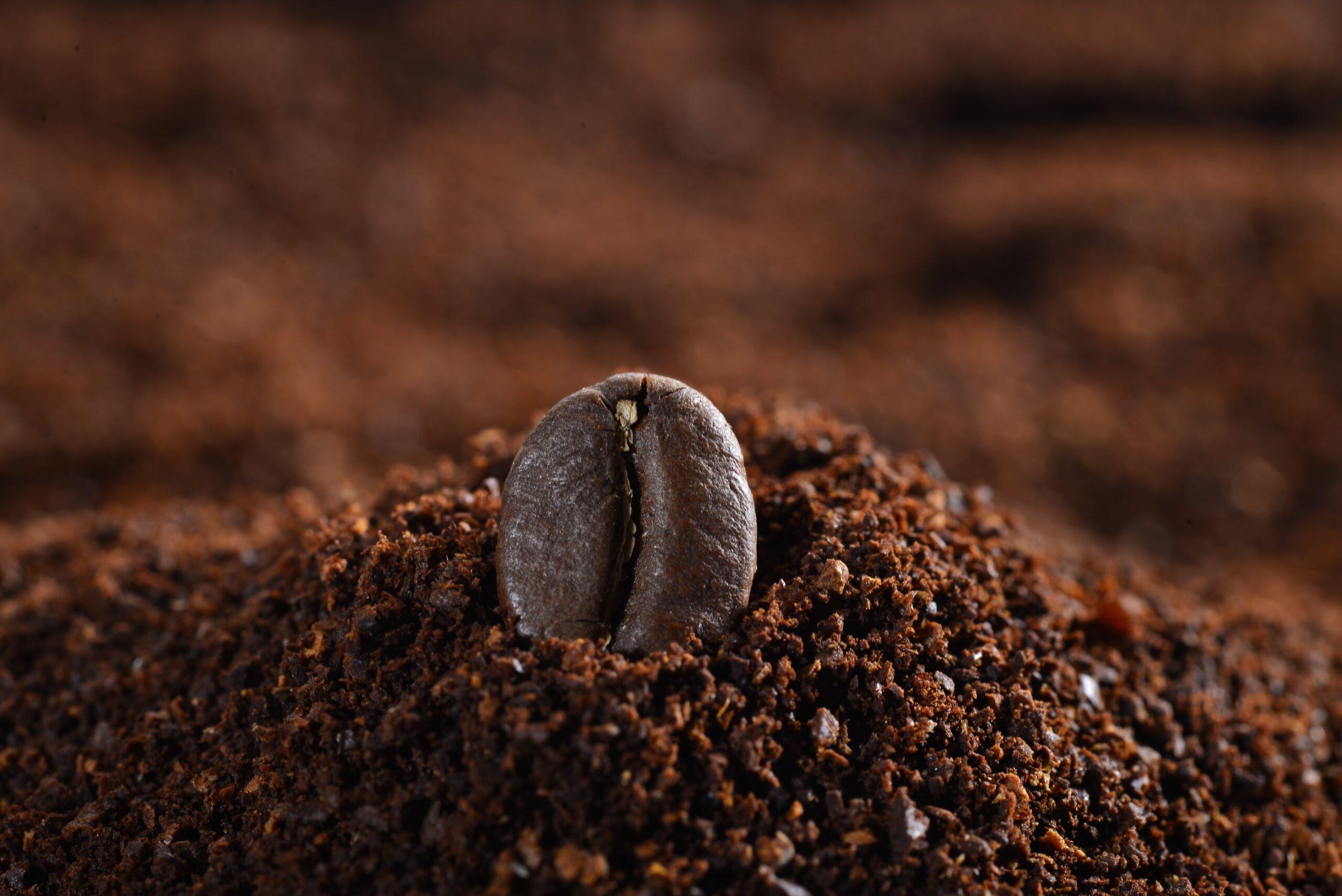 kafein nedir?